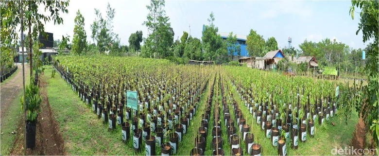 Ayo Ambil 1,5 Juta Pohon dan 20 Ribu Pohon Langka di Sentul, Gratis
