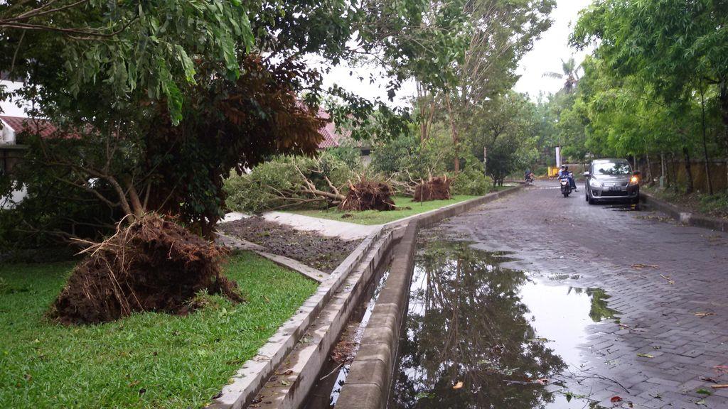Hujan Disertai Angin Landa Yogya, Puluhan Pohon di Kampus UMY Tumbang