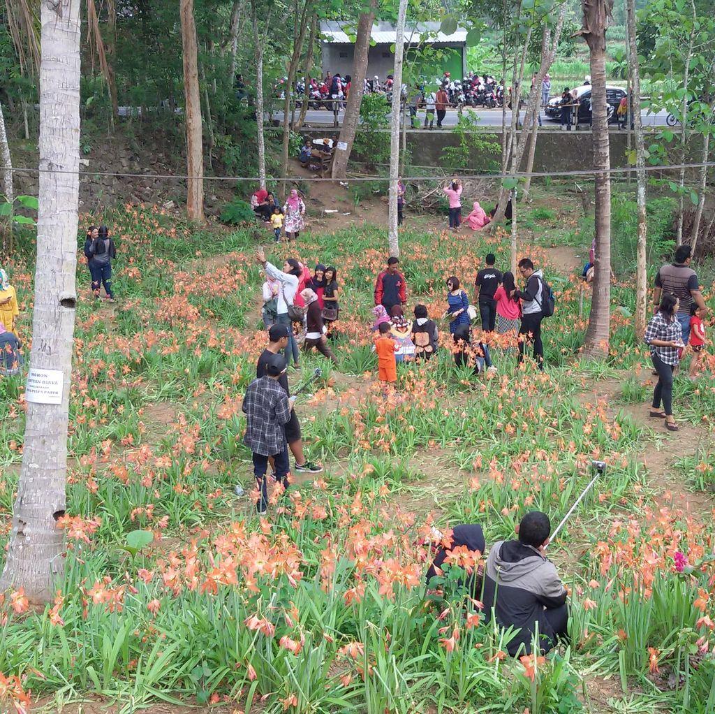Kebun Bunga Fenomenal Rusak karena Pengunjung, Begini Kata Pemilik