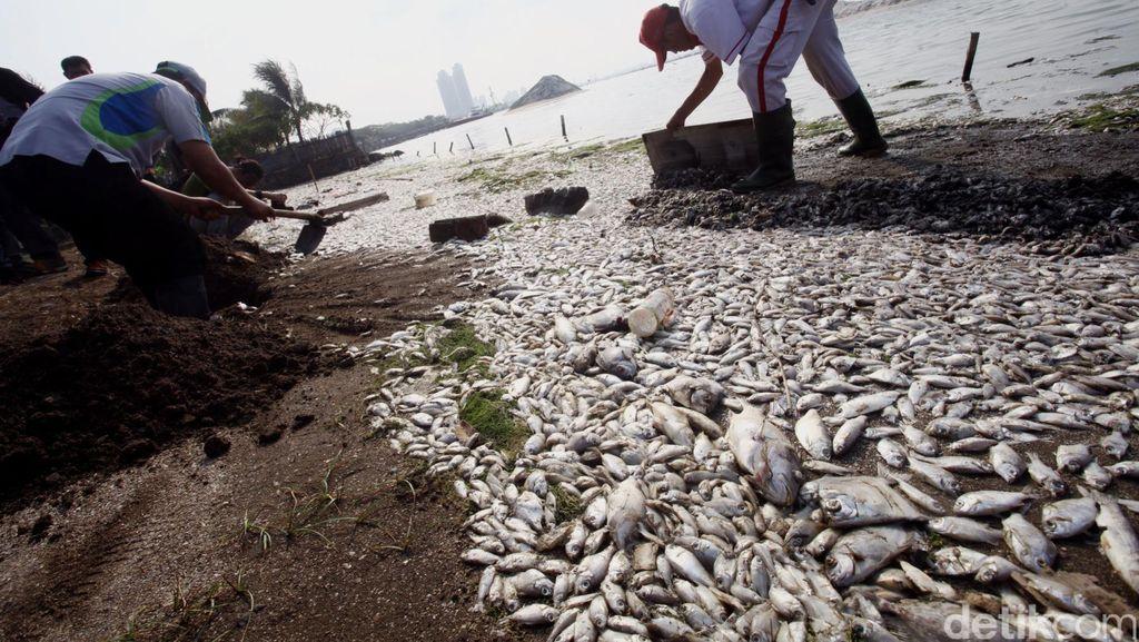 Polisi Kirim Sampel Ikan yang Mati di Ancol ke Dinas Perikanan Untuk Diteliti