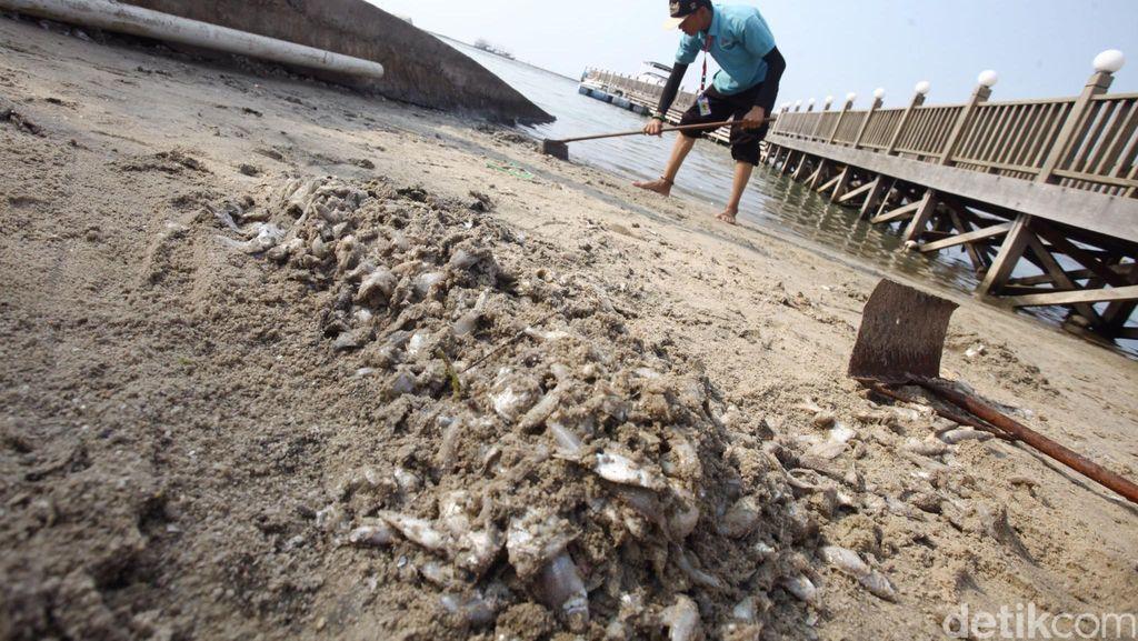 BPLHD DKI: Ikan Mati di Ancol Akibat Sampah di Sungai Bermuara ke Laut