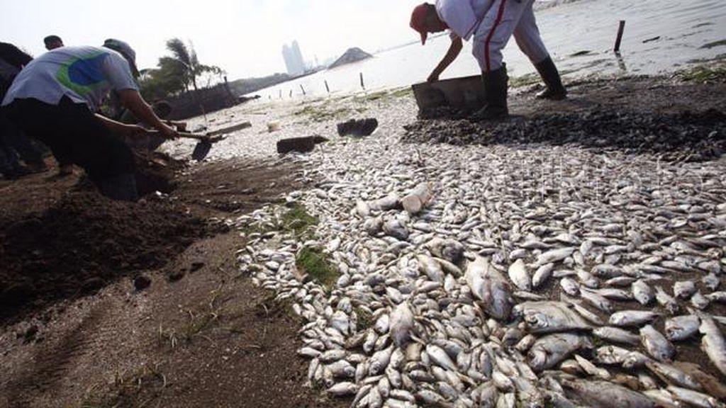 Limbah Warga Jadi Penyebab Utama Matinya Jutaan Ikan di Pantai Ancol