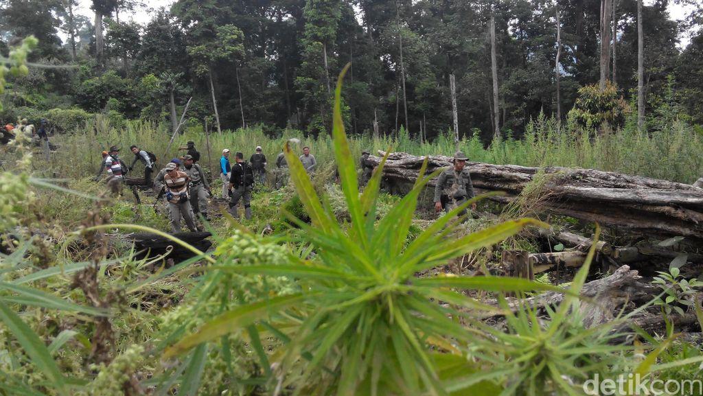 Aceh Butuh Heli Pantau Ladang Ganja dan RS Rehabilitasi Narkoba
