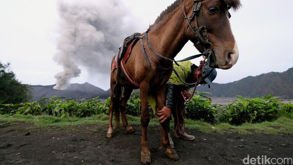 Kasada di Saat Status Gunung Bromo Waspada, Wisatawan Dilarang Dekati Kawah