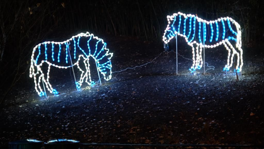 Indahnya Kebun Binatang di Washington DC Bermandikan Cahaya Jelang Natal