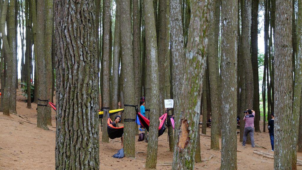Jokowi Teken PP Permohonan Tukar-menukar Fungsi Kawasan Hutan