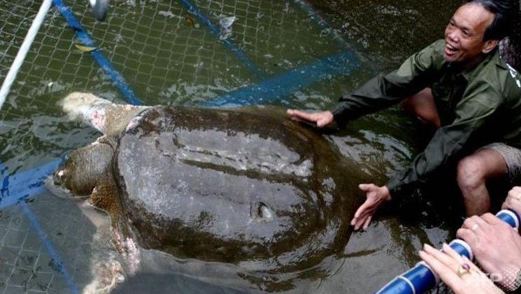 Duka Rakyat Vietnam Atas Kematian Kura-kura Langka