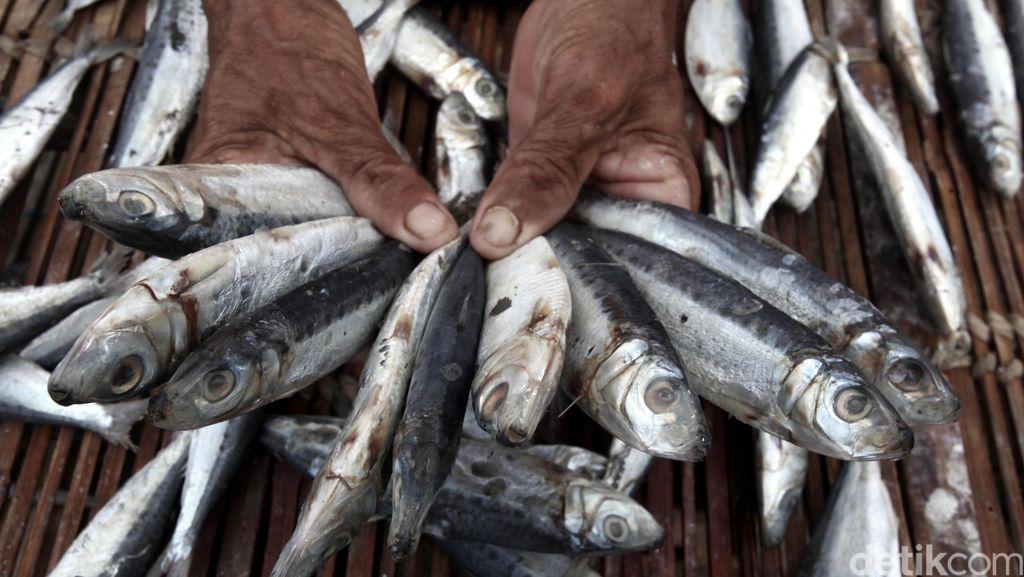 Mau Kabur, Nelayan dengan Pukat Harimau Berhasil Ditangkap di Simeuleu