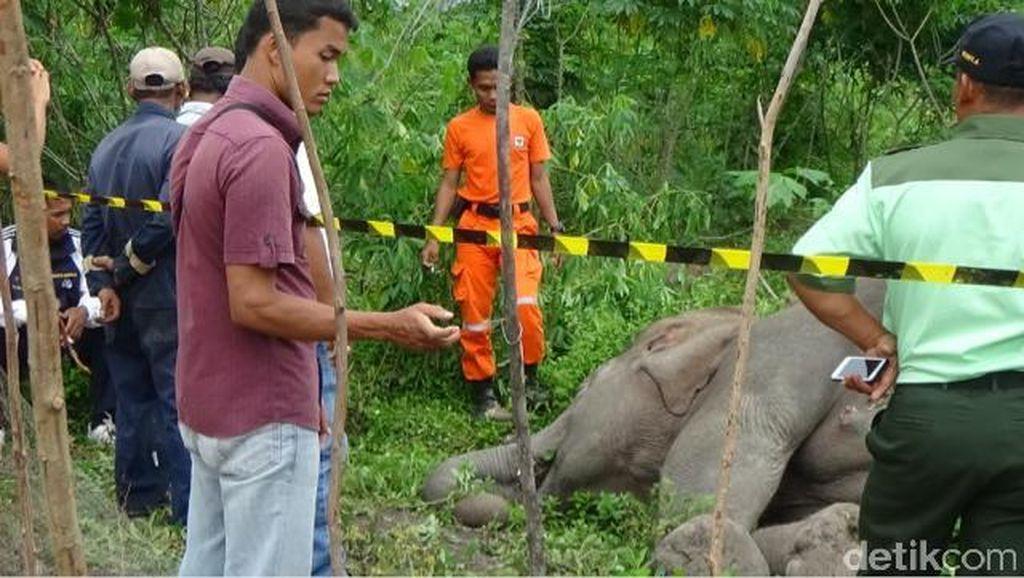 Segerombolan Gajah Mengamuk di Bengkalis Riau, 1 Rumah Hancur