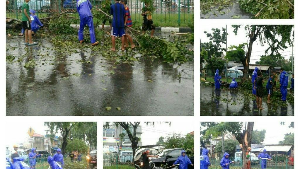 Hujan Deras Disertai Angin Akibatkan Pohon Tumbang di Jakarta
