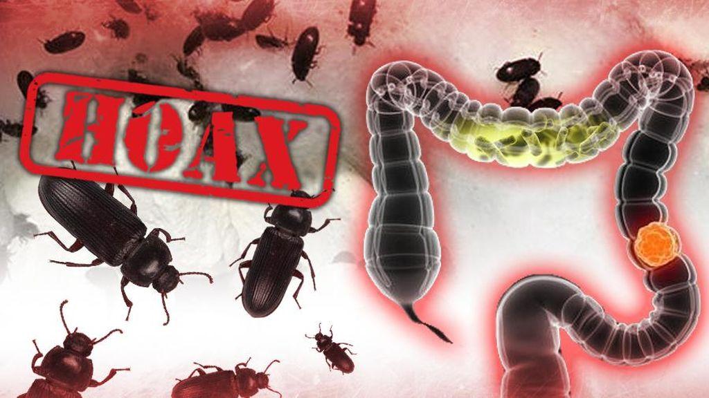 Broadcast Semut Jepang Jadi Obat Diabetes, Namun Membahayakan Usus
