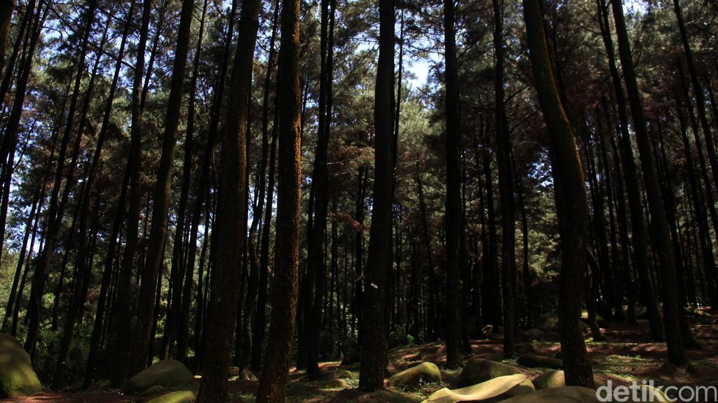 Dua Penebang Liar di Taman Gunung Melintang Sambas Ditangkap