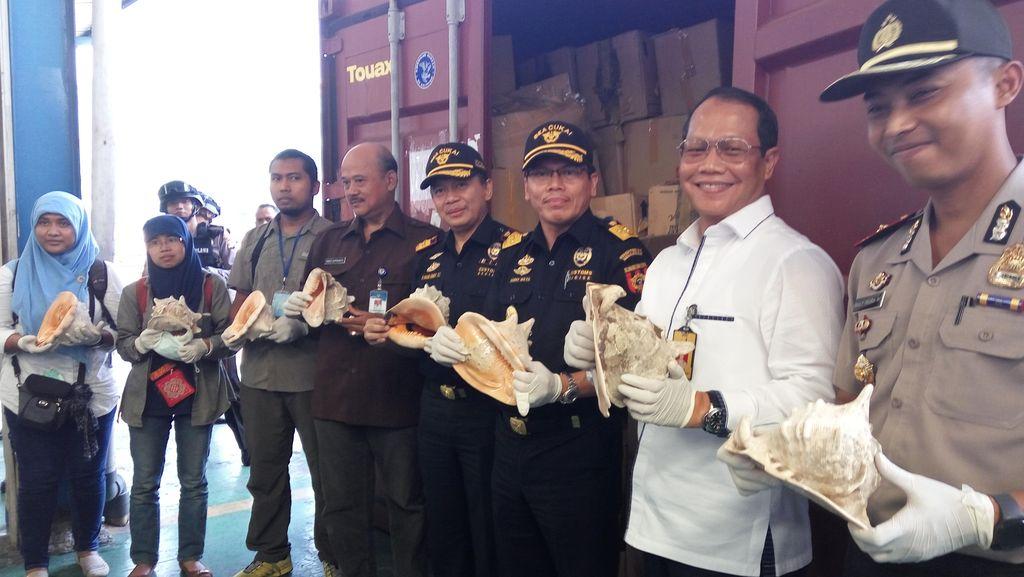 Bea Cukai Gagalkan Penyelundupan Cangkang Kerang Langka Senilai Rp 5,3 M