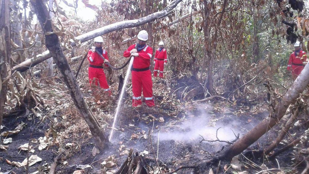 Kementerian LHK Bantah Sering Kalah di Persidangan Kasus Kebakaran Hutan