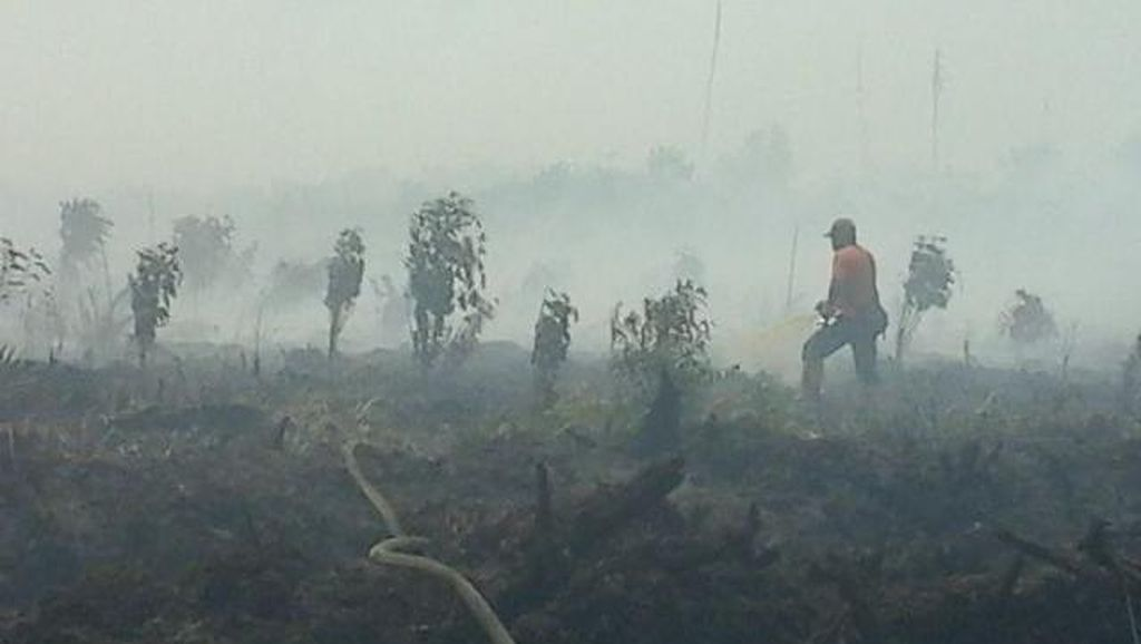 JK Sebut Singapura Tak Berhak Proses Hukum WNI yang Sebabkan Kebakaran Hutan