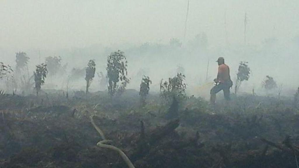 Telusuri SP3 15 Perusahaan Pembakar Hutan, Mabes Polri Kirim Tim ke Polda Riau
