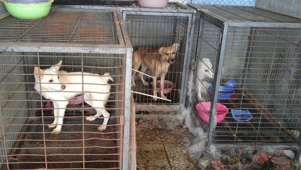 Begini Operasi Penyelamatan Puluhan Anjing dan Kucing di Gunung Sindur