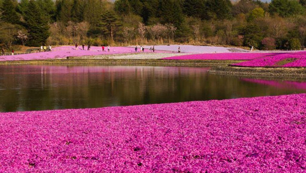 Jepang yang Tidak Hanya Cantik Saat Musim Sakura