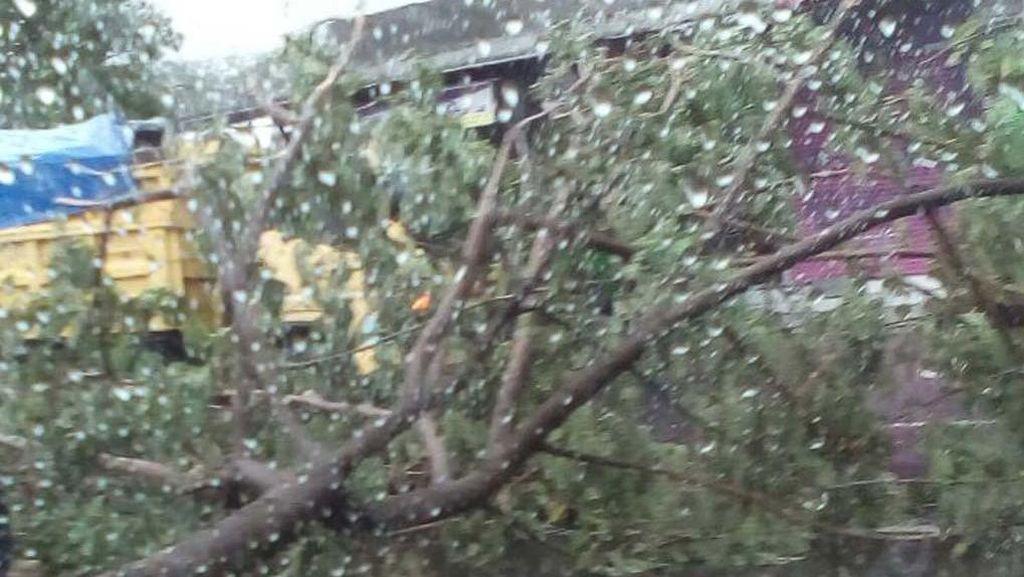 Pohon Tumbang di Rel Antara Tangerang-Taman Kota, KRL Sempat Tertahan