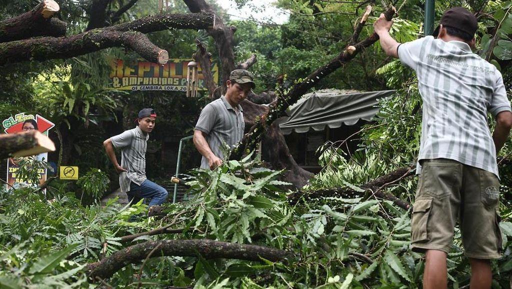 Kisah Tragis Sutini, Pemilik Warung di Gembira Loka yang Tewas Tertimpa Pohon