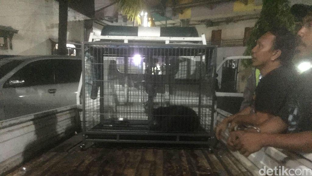 Kisah Anjing yang Dituduh Ngepet di Bekasi