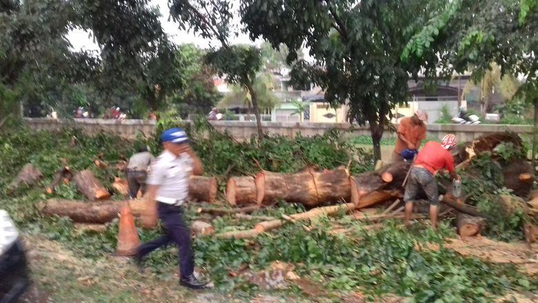 516166f5 65ba 49e2 9513 46ff35cd641a 169 » Pohon Tumbang Di Kalimalang, Dishub Bekasi: Warga Yang Ke Jaktim Gunakan Alternatif