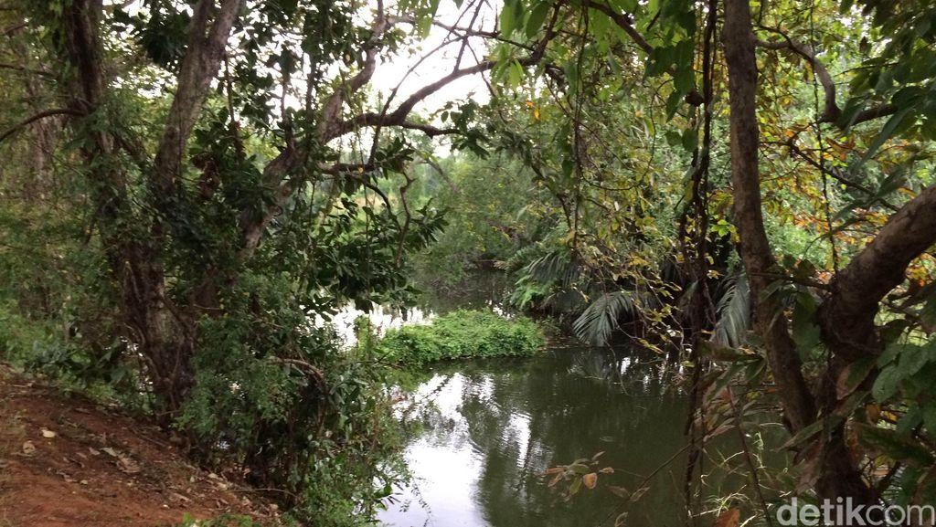 Menengok Habitat Asli Sarimin di Hutan Mangrove Muara Angke