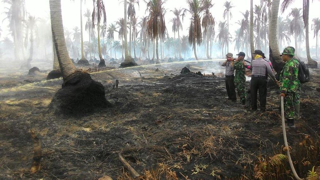 Lahan di Meranti Riau Terbakar, Kebun Kelapa Warga Ludes Jadi Korban