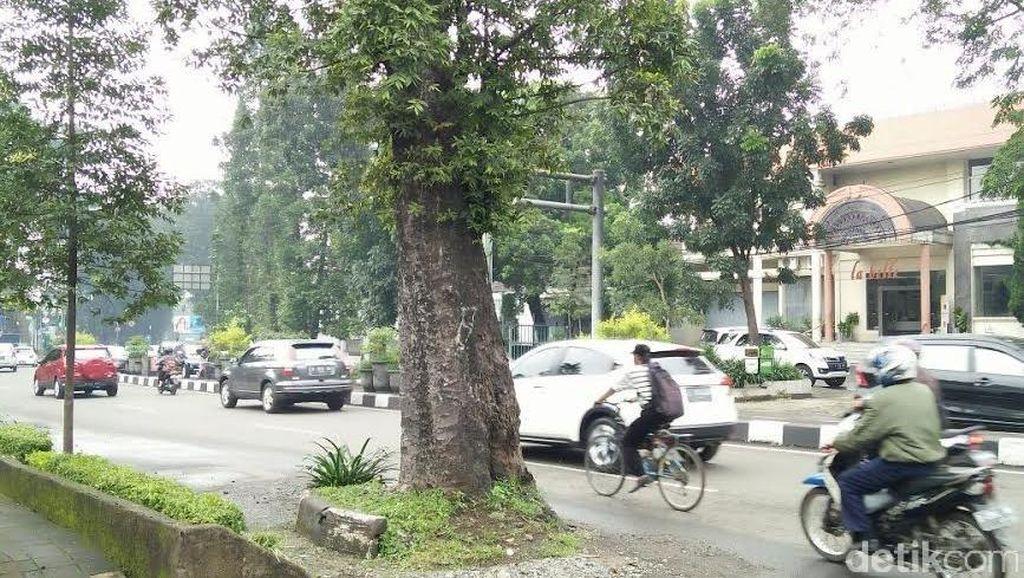 Pohon Tua di Jl Dago Dianggap Membahayakan, Banyak Permintaan Agar Segera Ditebang