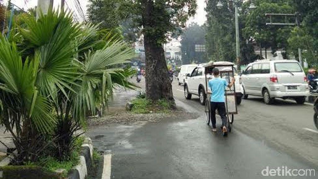 Penebangan Pohon Tua di Jl Dago yang Halangi Jalan Tertunda karena Ridwan Kamil