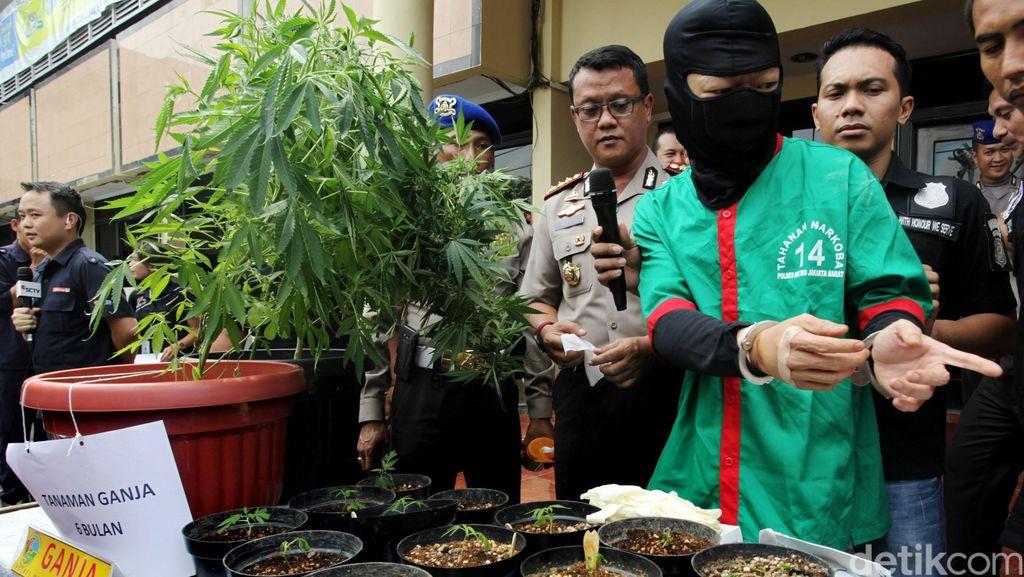 Berkebun Ganja di Apartemen Pluit, Derrick Mengaku untuk Konsumsi Sendiri