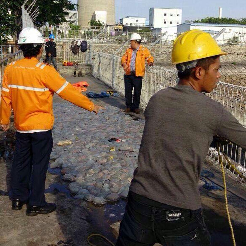 Ribuan Ubur-ubur di Perairan Probolinggo Rusak Mesin Pendingin PLTU Paiton