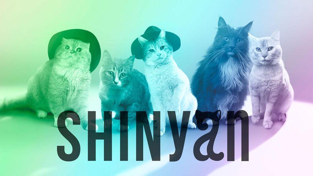 Lima Kucing Lucu Ini Jadi Alter-Ego SHINee dan Siap Debut di Jepang!