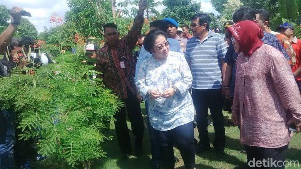 Dijemput Mega ke Jakarta? Risma: Ndak