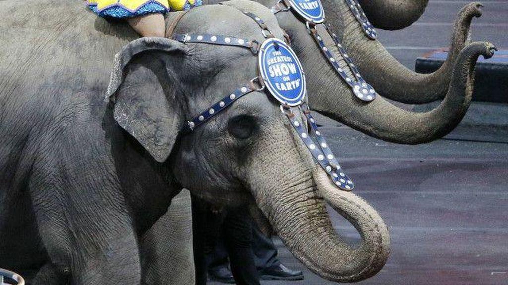 Gajah Tidak Lagi Jadi Bagian Pertunjukan Sirkus di Amerika