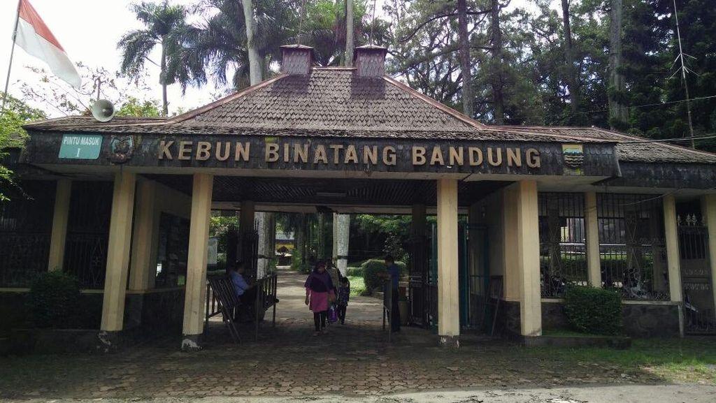 Pemkot Bandung akan Layangkan Somasi ke Kebun Binatang Bandung