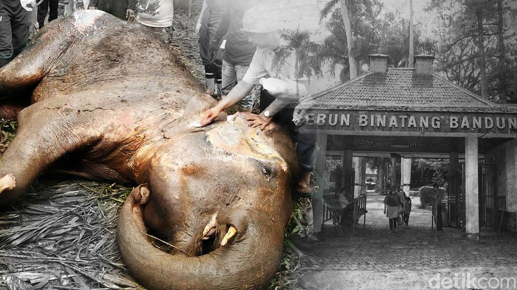 DPRD Tuding Pengelola Kebun Binatang Bandung Tak Profesional, ini Buktinya
