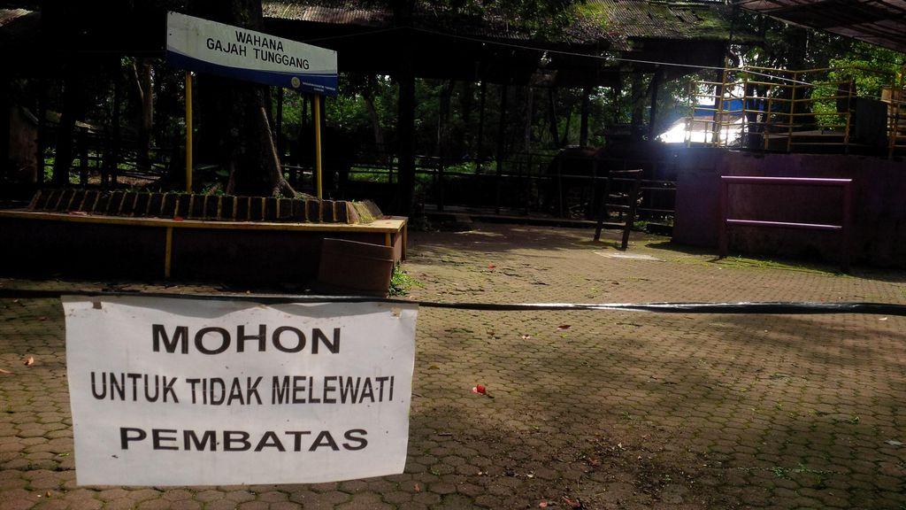 Pasca Kematian Gajah Yani, PKBSI: Kebun Binatang Bandung Aman Dikunjungi