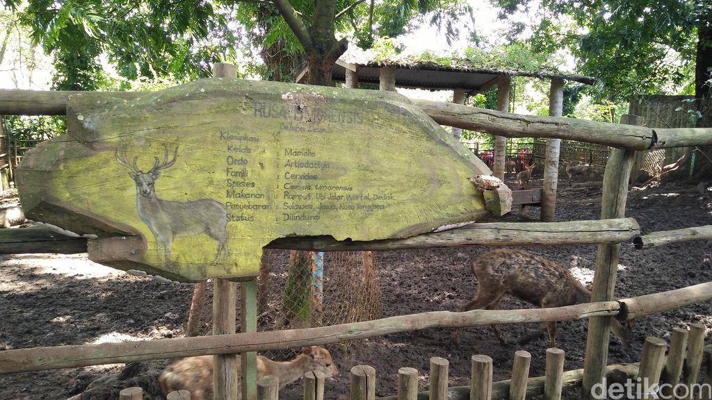 Rusa di Kebun Binatang Bandung Disebut Berpenyakit Kulit, Begini Kondisinya
