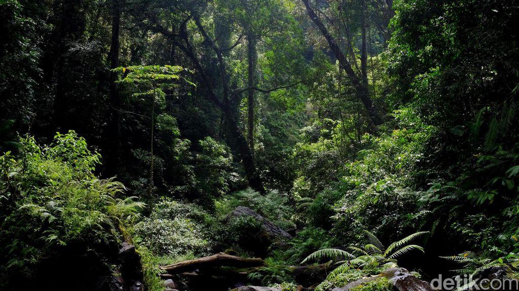 Hilang di Hutan Usai Ditinggal Orangtuanya, Bocah Jepang Belum Ditemukan