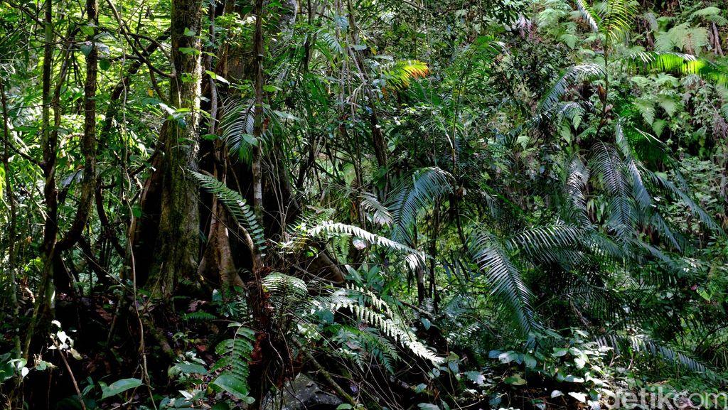 Jaga Hutan Konservasi Jadi Tantangan Bagi Indonesia