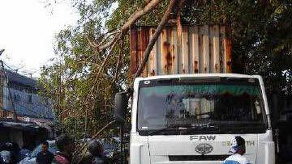Pohon Tumbang Timpa Kontainer di Cakung, Arus Lalin Sempat Macet