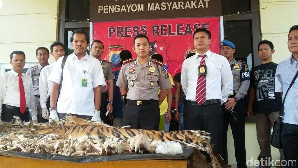 Jual Kulit dan Tulang Harimau Sumatera Rp 42 Juta, 3 Petani di Langkat Dibekuk