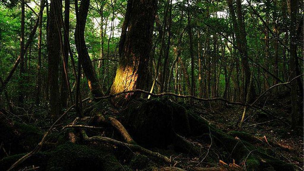 Dihukum dengan Ditinggal di Hutan, Anak Jepang Berusia 7 Tahun Malah Hilang