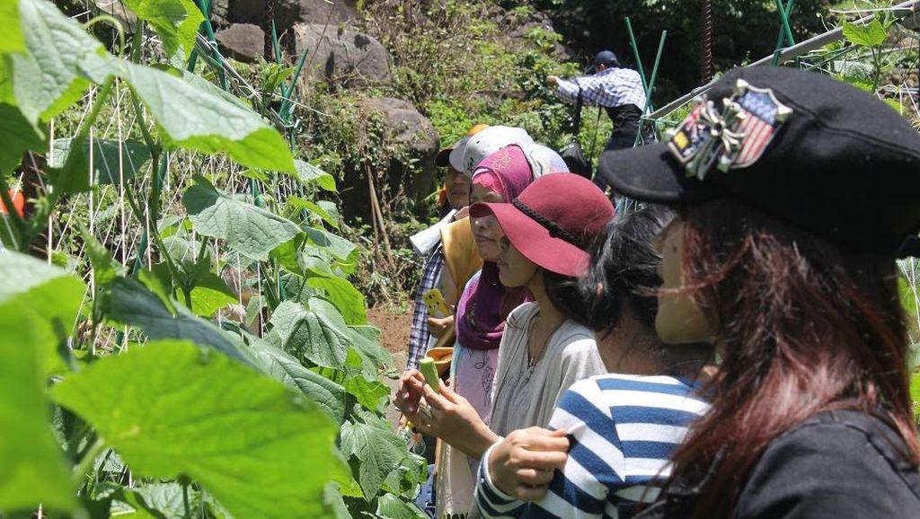 Ketika TKI di Taiwan Belajar Bertani Organik