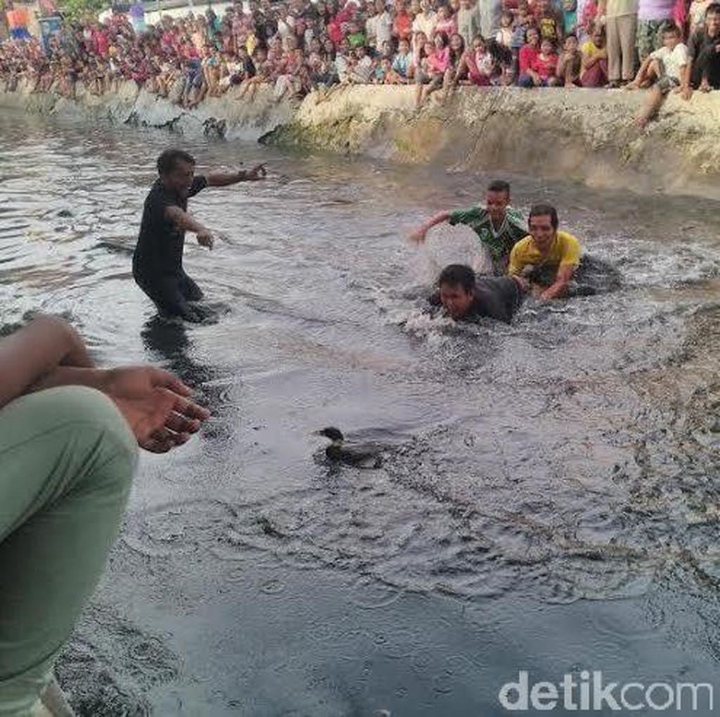 Peringati HUT Surabaya, Warga Mojo Gelar Lomba Berebut Bebek di Sungai