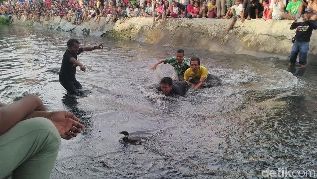 Serunya Warga Mojo Berebut Bebek di Sungai Kalidami