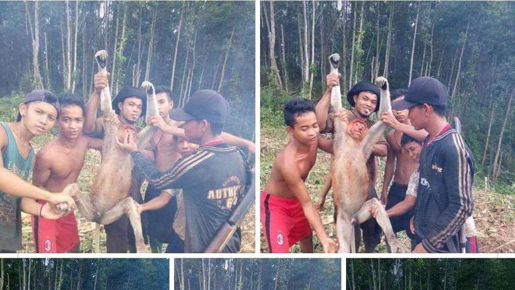 6 Pemuda Kalbar Pamerkan Foto Tangkap Bekantan, Ini Respons Menteri LHK