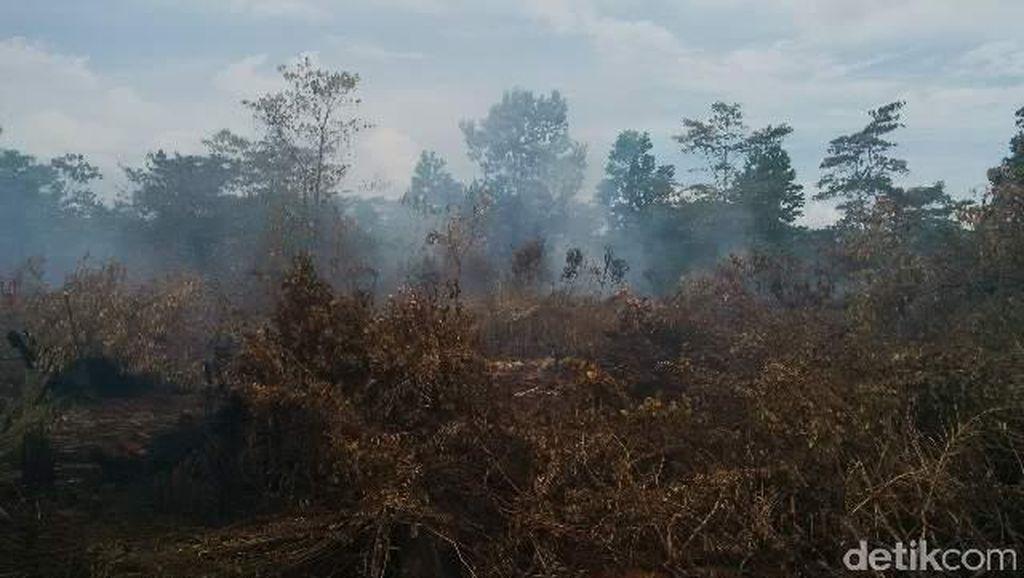 JK Berharap Negara Tetangga Ikut Bantu RI Tangani Kebakaran Hutan