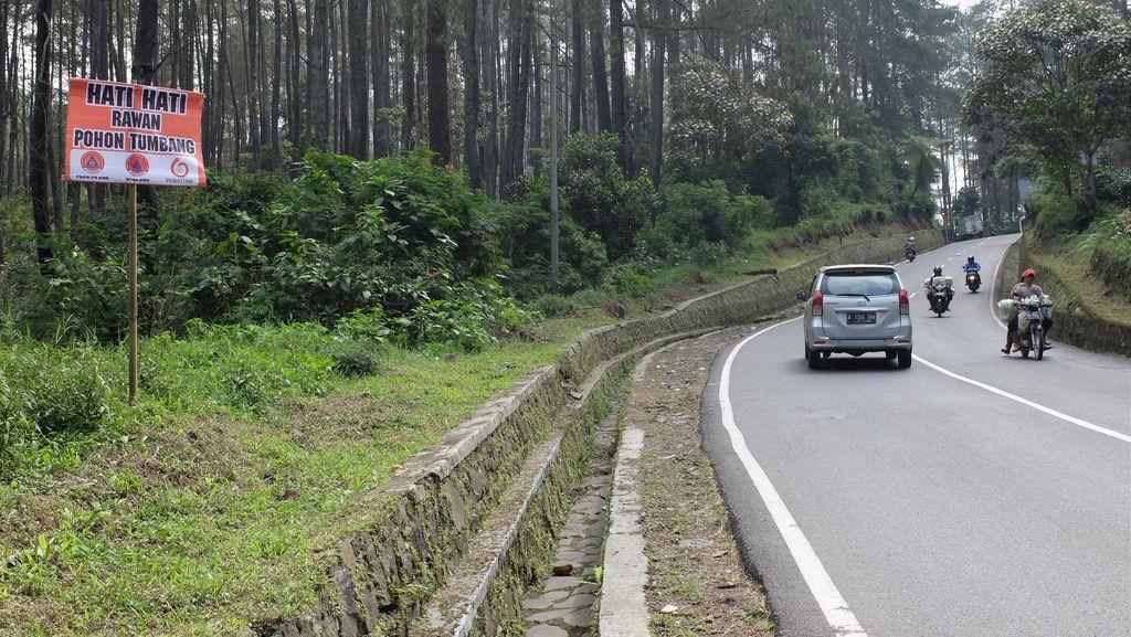 Rawan Pohon Tumbang, Hati-hati Lewati Jalur Lembang